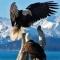 Eagle1004