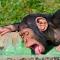 monkeydrinking
