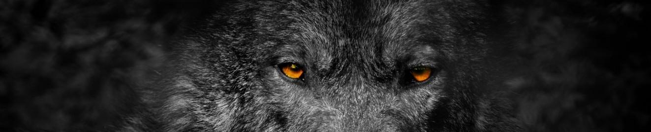 Flint Wolf