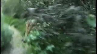 Hairy Black Snatch 2 - Scene 5