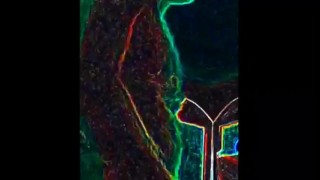Wompus yumpkinstaaawooo gully webcam hampshire