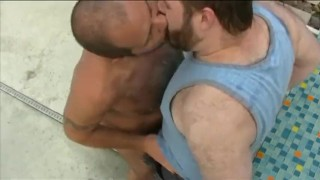All Amateur Bears 6 Rough rimming