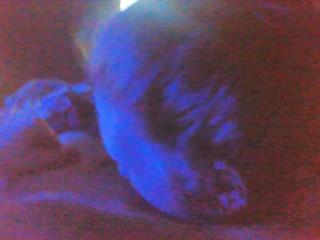 kittytits
