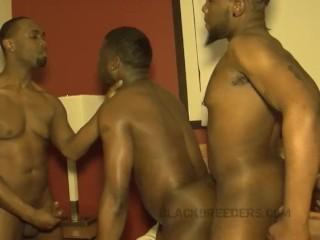 Porn gay free download