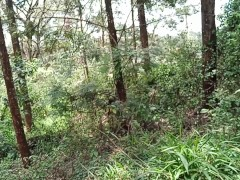 Teen Exposes Butt In A Forest Outside