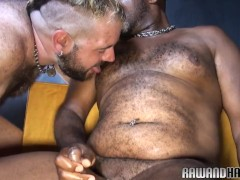 Chubby black bear rims his hairy lover