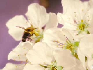 Trans bee pops shy