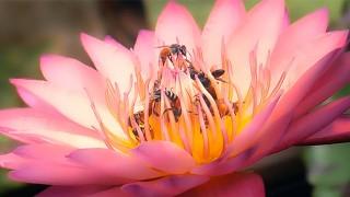 twenty dicked flower hosts massive orgy
