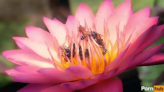 Orgy dicked hosts flower massive twenty pollination outdoors