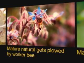 Pornhub Cares Presents: Beesexual