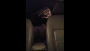 Teenage Couple Fucking In the Backseat