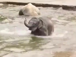 just a video about some baby elephants passing through