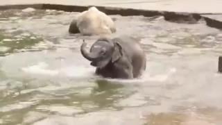 Sex filmy - Elephant trunk Jen Video O Tom, Jak Procházejí Nějaké Slony