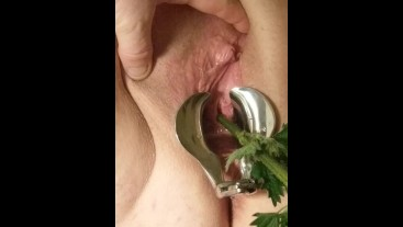 Medical Speculum Stretched Pussy Nettle stalk inserted into urethra peehole