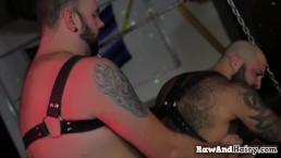 Bearded stud sucks dick and gets barebacked