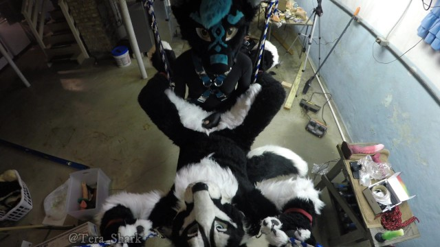 Dildo harnesses Murrsuiter gets pegged hard by a dominatrix in a swing
